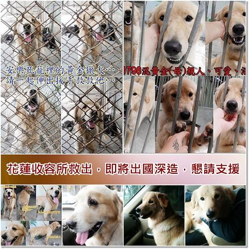 「支援與祝福」花蓮收容所救出的兩隻黃金獵犬,即將出國深造,懇請支援最後這一段旅程,謝謝您~20110104