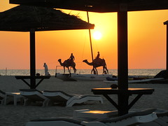 Camels on the beach (Paul_1965) Tags: sunset sun bed dubai bach camels umberella