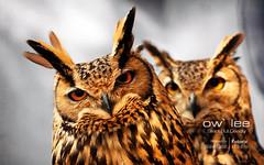Ow`lee - Silent but deadly! (Fotorix Studio) Tags: pakistan bird zoo wildlife jungle owl punjab nationalgeographic islamabad wildanimals rawalpindi islamabadzoo bahriatown slbraisingeartufts waleedirfan