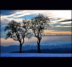 two(2) (klaus53) Tags: trees winter two snow clouds landscape nikon upperaustria mhlviertel haarland thesecretlifeoftrees schwertberg vanagram schedlberg