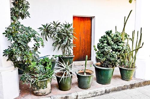 En Oaxaca (55)