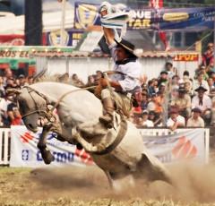 Tierra adentro (Eduardo Amorim) Tags: horses horse southamerica caballo uruguay cheval caballos cavalos prado montevideo pferde cavalli cavallo cavalo gauchos pferd hest hevonen chevaux gaucho  amricadosul montevidu hst uruguai gacho  amriquedusud  gachos  sudamrica suramrica amricadelsur  sdamerika jineteada   americadelsud gineteada  americameridionale semanacriolla semanacriolladelprado eduardoamorim iayayam yamaiay semanacriolladelprado2010