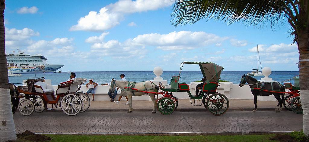 Cozumel_Horses