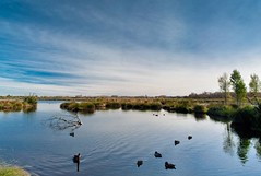 Ducks Serene Swim (lee.malzard) Tags: blue sky sun lake reflection green nature water clouds landscape hill sunny clear swamp land bliss mountian feild medow