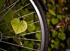 I heart bikes (ssj_george) Tags: street plant canada macro green bike bicycle wheel closeup lens lumix iso100 heart shaped plateau montreal tire panasonic 17 isolation pancake 20mm dmc heartshaped axes f17 m43 gf1 georgestavrinos micro43rds ssjgeorge