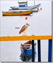 O pssaro em repouso... (Marina Linhares) Tags: sea nature birds boat mar barca barco natureza natura aves bateau pssaros dblringexcellence