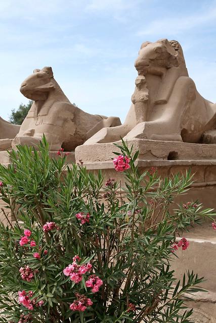 エジプト ルクソール カルナック神殿のスフィンクス