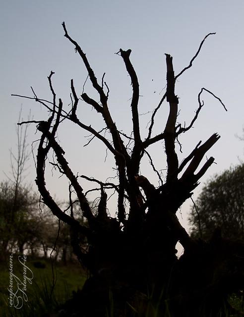 Medusa - Natur-Fotografie Joerg Esser
