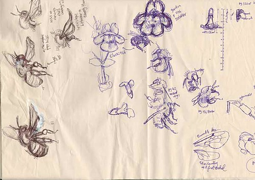w_2001-05-04_bee-sketches