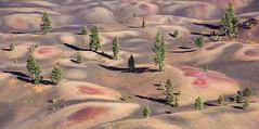 Painted Desert (jsuhanick) Tags: 201609untitled2291small tree color red green lassennationalpark lassen park cinder cone painted painteddesert desert