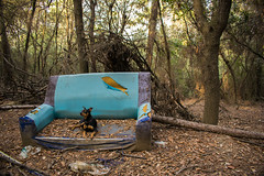 Otto chillin' (alejo.365shoots) Tags: dog woods forest garbage sofa nature relax pinscher 365