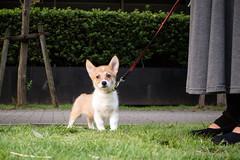 IMG_2102.jpg ( Yukio Endo) Tags: shelly