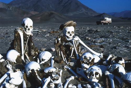 T3-PE88-Nazca-bones