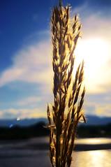 <<Sine luce, sine cruce et sine Deo>> (ZyklonB) Tags: sun luz sol ro river colombia magdalena luce cruce deo sine villavieja espiga nieva