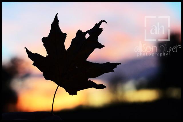web leaf