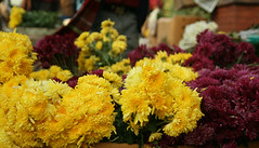 IMG_1328 (asadjaved) Tags: new india flower place market circus delhi mandi rajiv connaught chowk phool