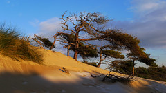 Dunes Formby (frazerweb) Tags: point sand dunes merseyside formby sefton freshfield frazerweb ravenmeals