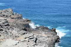 IMG_8601 (avsfan1321) Tags: ocean usa hawaii unitedstates unitedstatesofamerica maui blowhole nakalele nakaleleblowhole nakalelepoint