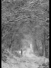 1011 rbw 101201 (thethi (don't like beta groups)) Tags: bw nature belgium belgique path nb neige arbre sentier brouillard namur wallonie ravel provincedenamur bestof2010 mygearandmeplatinum setnovembre setnamurcity setmorethan15forexplore20102011 ruby20 rubyfrontpage setbwsepia faves46
