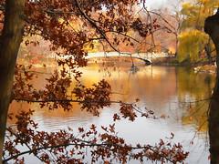 Thanksgiving in Central Park (mklgzm) Tags: nyc trip viaje newyork hojas lago agua arboles centralpark colores noviembre otoño vacaciones nuevayork hollidays