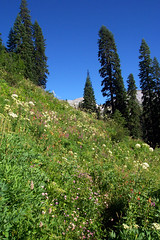 Wildflowers in the Marble Mountains
