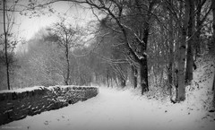 (andrewlee1967) Tags: wall snow trees path trail blackandwhite bw dukinfield canonpowershot sx110is tameside cheshire uk gb england britain andrewlee1967 mono winter cold mywinners andrewlee