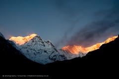 Annapurna South at sunrise (Alex Treadway) Tags: nepal mountain snow sunrise trekking easter asia buddhist east prayerflags himalaya annapurna himalayas highaltitude nepali icefall basecamptrek galcier annapurnasouth annapurna1