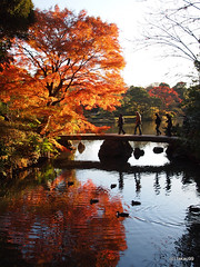 Autumn Leaves and Bridge, Japan (_takau99) Tags: trip travel vacation holiday topv111 japan gardens pen garden tokyo december olympus autumnleaves   sengoku 2010 rikugien  komagome   takau99 penlite   rikugiengardens epl1  gettyimagesjapanq1