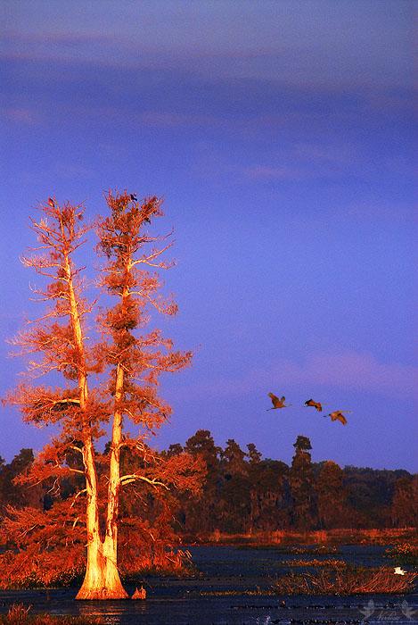 The V Tree
