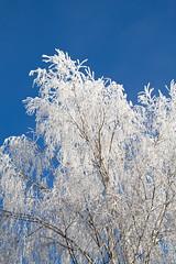 Frosty Stratford #15
