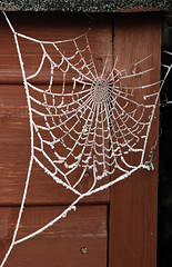 Frosted cobweb on the shed (jthornett) Tags: winter cold ice frozen frost shed cobweb