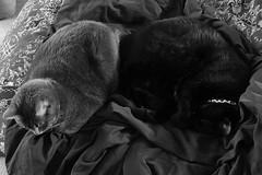 FINALLY!!! (knorris908) Tags: light rescue pet cat nikon feline natural f11 iso1600 d700