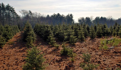 Harittka Tree Farm