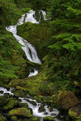 Bunch Creek Falls (jeremyjonkman) Tags: park lake fern green fall water rain rock creek forest canon photography eos washington moss spring rocks jeremy falls national bunch 5d olympic ferns mossy quinalt jonkman