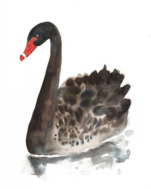 dimdi black swan