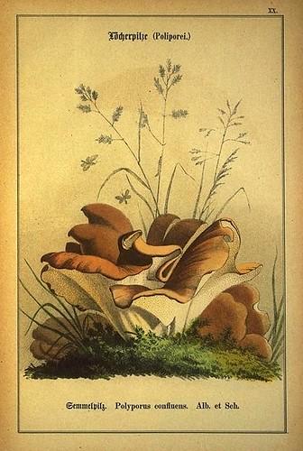 020-Allgemein verbreitete eßbare und schädliche Pilze 1876- Wilhelm von Ahles