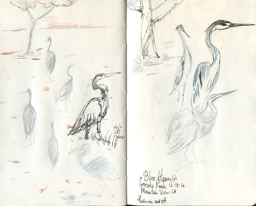 December 18, 2010: Blue Heron