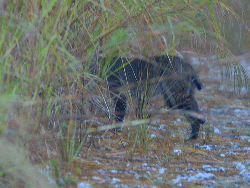 Bobcat 2-20101223