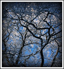 Looking up at the frozen canopy above (Eibhilin Crossan) Tags: blue ireland winter light sky sun mist snow cold macro tree ice nature landscape frozen frost branch icy longford