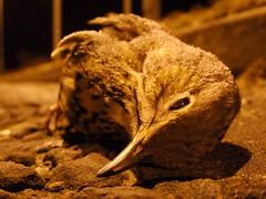 froken bird (maf*pHew) Tags: street baby bird dead frozen streetlight frost beak young starvation frostbite spnp yimby ttfp streetphotographynowproject mafphew mafphoto