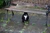 IMGP9682 (mattbuck4950) Tags: england cats wet rain unitedkingdom smudge somerset september patio damp 2010 northsomerset pentaxkx wraxall sigma18200mm