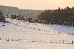Winter landscape (Ole Begemann) Tags: schnee trees winter plants white snow nature yellow fence landscapes natur pflanzen gelb zaun bume baum 2010 landschaften camera:iso=200 lens:aperture=f56 camera:shutter=sec camera:model=nikond5000 lens:focallength=165mm original:filename=20101224d5000000142