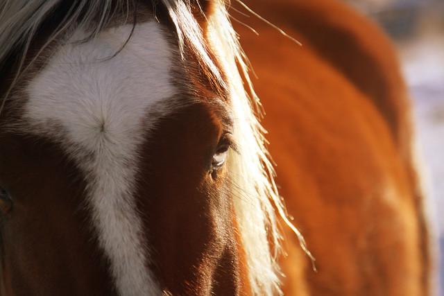 sunshine-horse