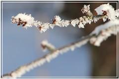 Eiskristalle (Ulrike64) Tags: schnee winter cold december crystal dezember eis icecrystal klte mittweida knospen kirschbaum kristalle eiskristalle