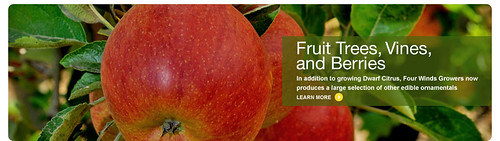 banner_fruit_trees