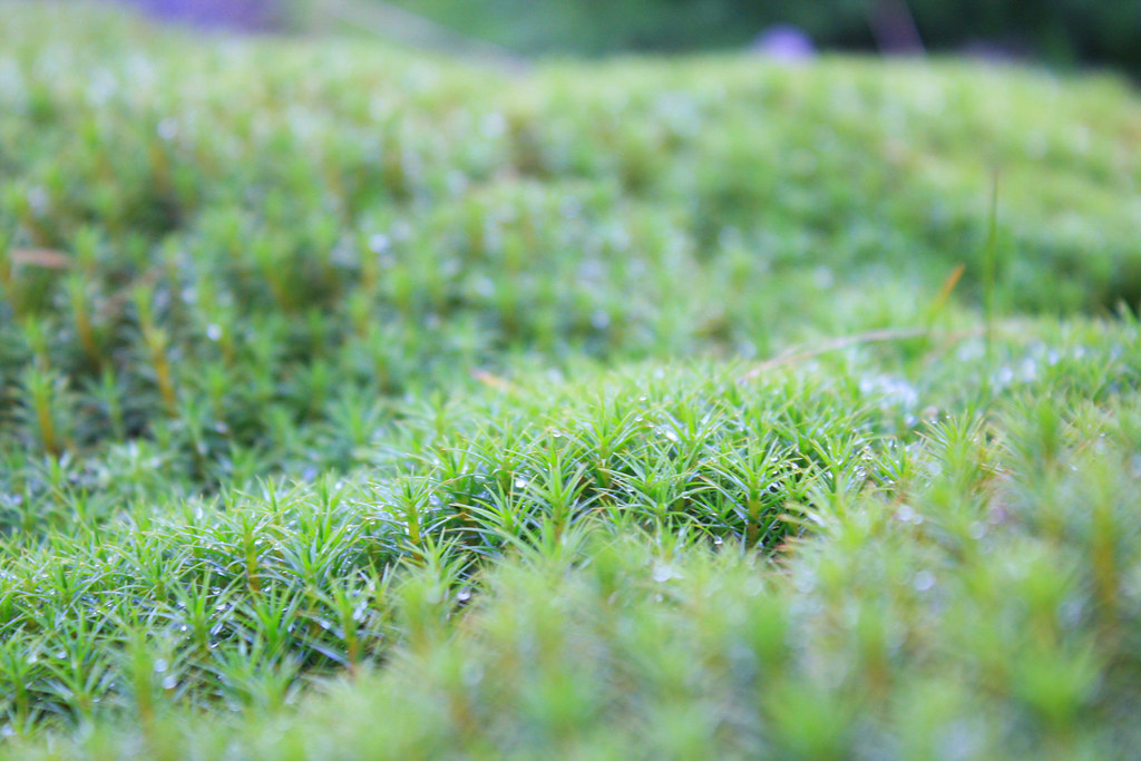 http://farm6.static.flickr.com/5284/5313457888_be536b5999_b.jpg