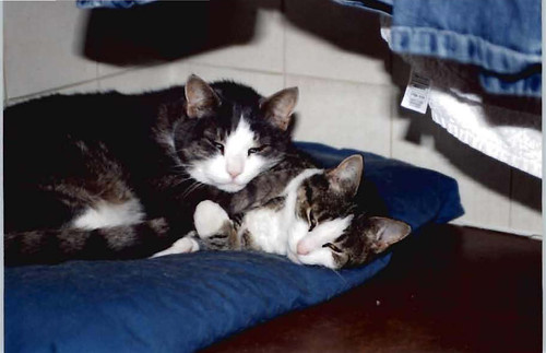 Amber the cat (right) killed by a 26lb fox