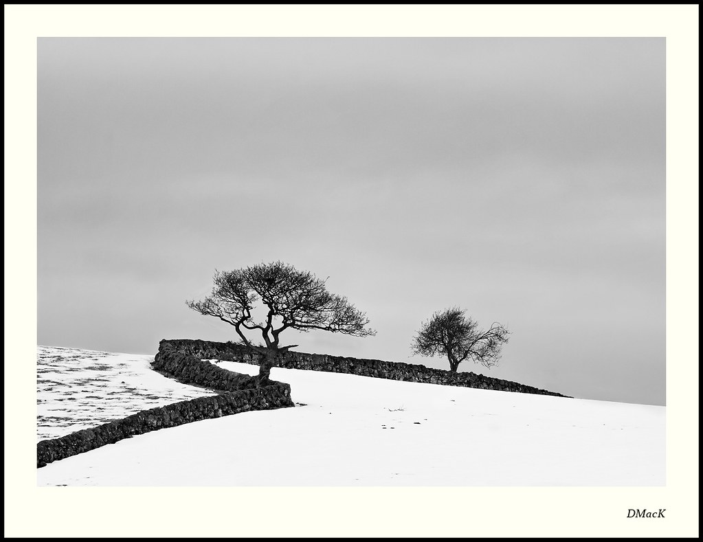 A Wall and Two Trees 2