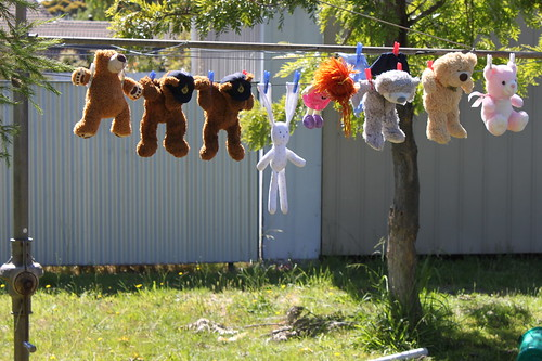 Teddy wash day
