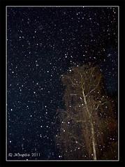 Snow is Falling (JKmedia) Tags: winter snow tree up weather night season looking january falling 2011 canoneos40d fabcap jkmedia n15c pregamesweepwinner